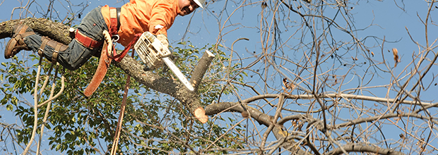About Us | Crews Timber and All Type Tree Services Inc - Woodbine, GA